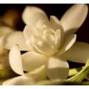 Histoires de Parfums Tuberose 1 Capricieuse 120ml